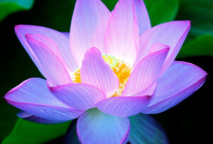 Reiki long distance energy healing